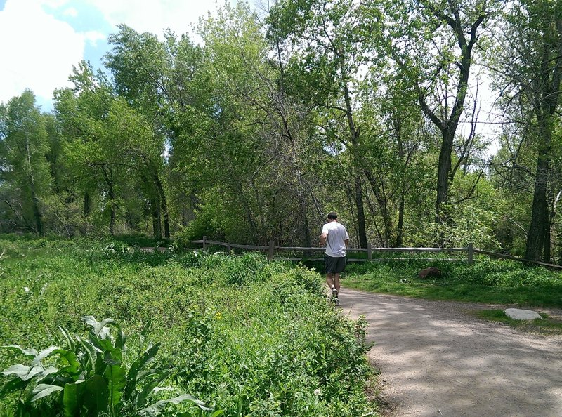 Great running surface on the Bobolink Trail.