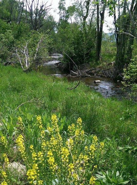 Spring wildflowers along South Boulder Creek.