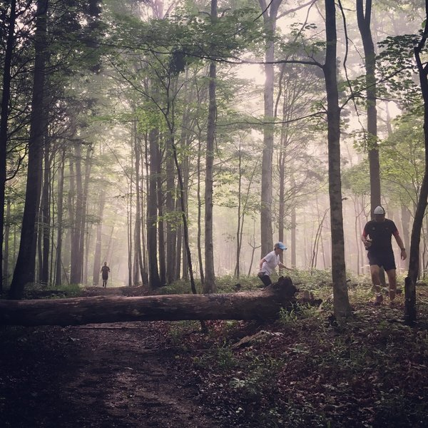 Downed tree and fog made for a great early morning run experience.