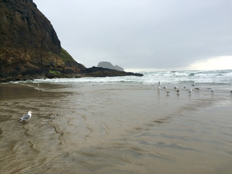 Seagulls wading in the water at Short Beach.