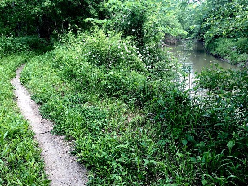 Singletrack running alongside Clear Creek.