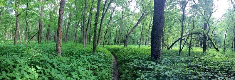 Singetrack cutting through the clear creek greenway.