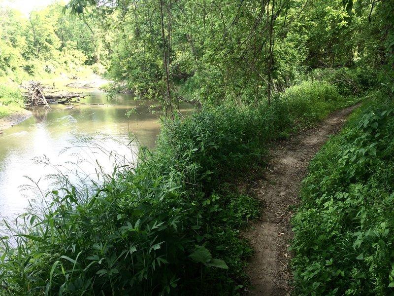 Singletrack along Clear Creek.
