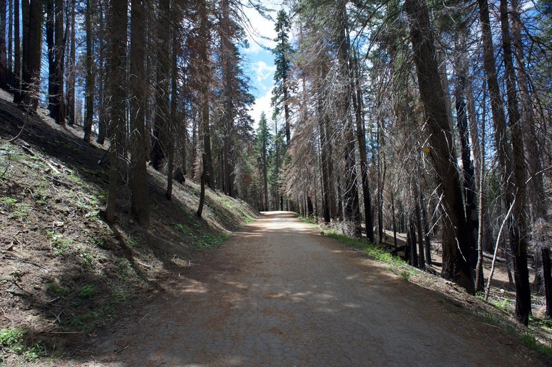 The trail as it makes its way back to the trailhead. It's a pleasant trail, popular with families.