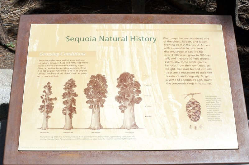 Signs at the trailhead provide information on the giant trees that you are about to encounter.
