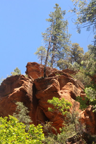 Tree hanging on the edge of the rock!