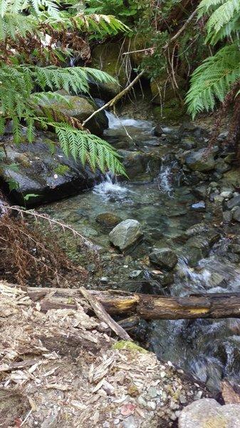 East Fork of Pine Creek.