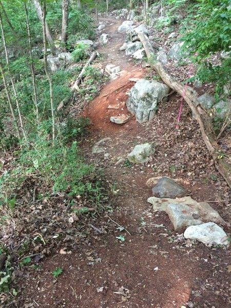 Trail going over dry creek bed, steps on both sides.