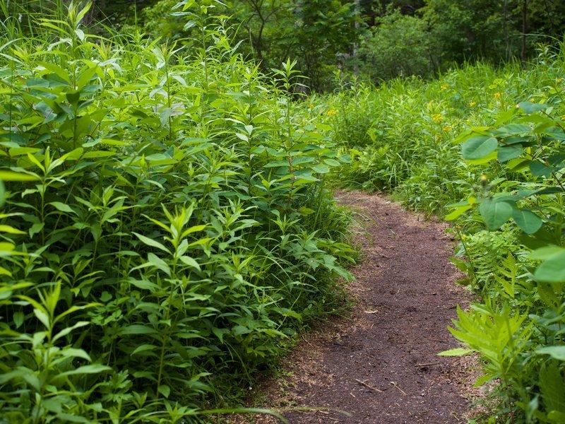 Acadia greenery.