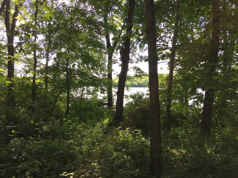 Lake MacBride through the trees from the Angler's Point Trail.