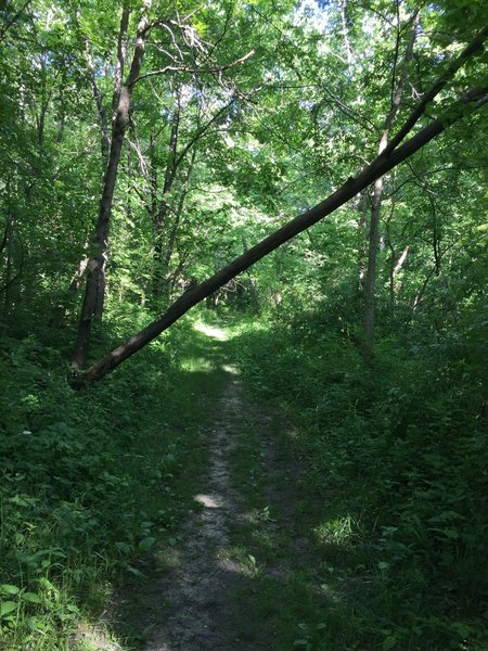 Field Campus Trail, low clearance.