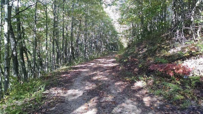 Trail in Fontana Dam, NC. It's part of the Writers Who Run 10k Trail Race on August 7.