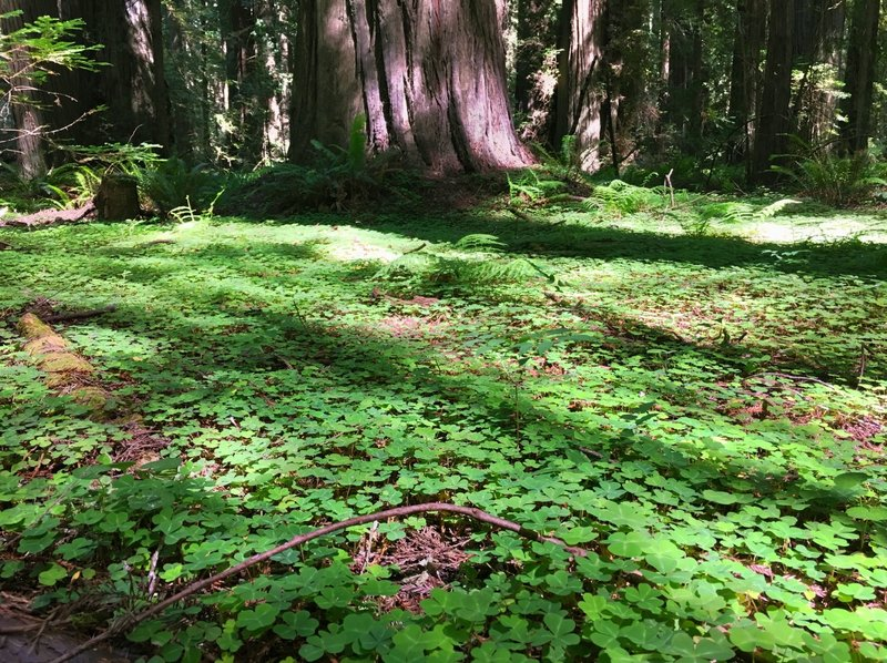 Beautiful forest floor.