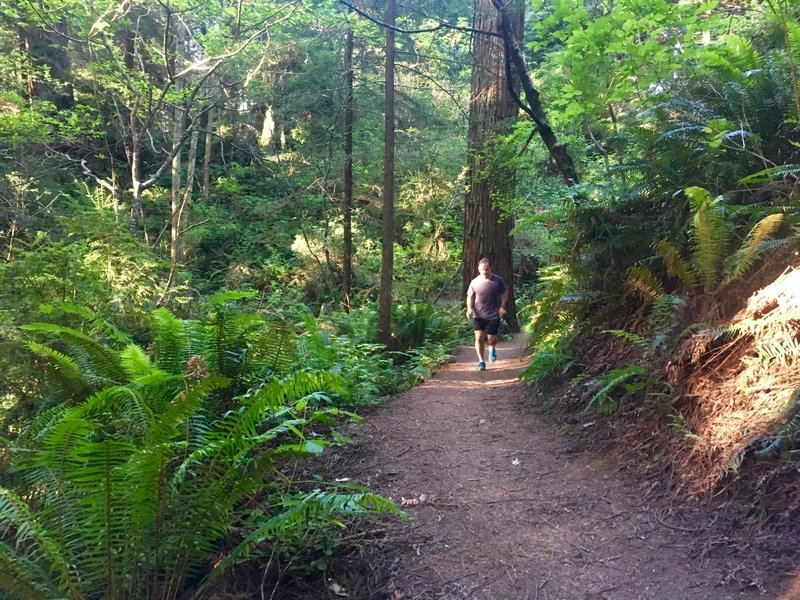 Nice stretch in the Arcata Community Forest.
