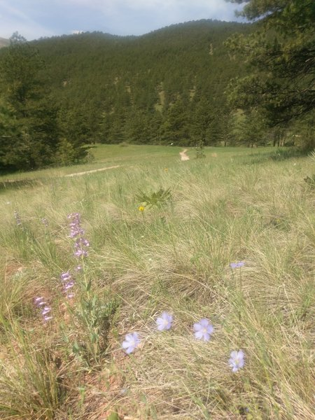 Wildflowers line this scenic trail.