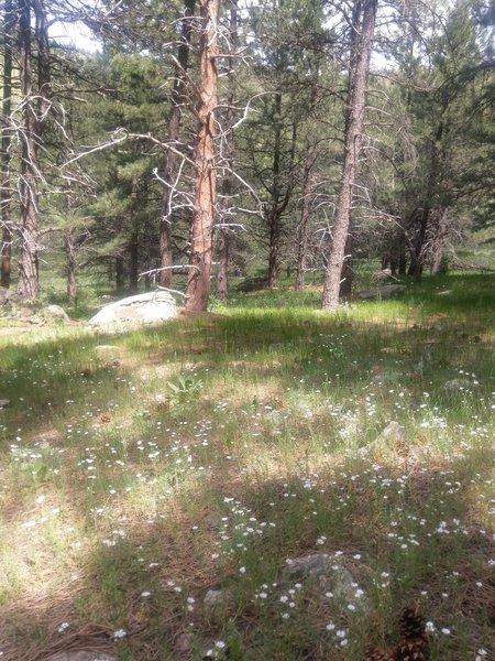 Wildflowers blanket the forest floor here.