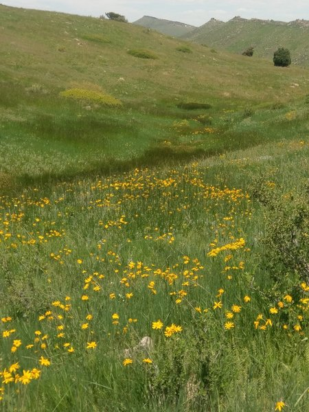 Flower-filled meadows thrive along the wetter parts of the trail.