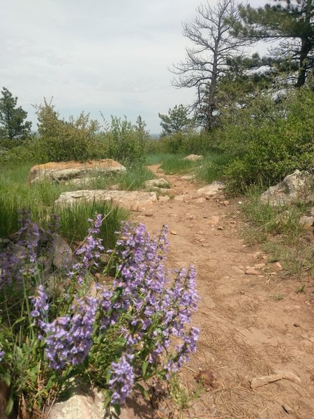 Typical trail surface and wildflower ornamentation.