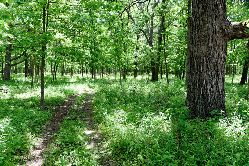 Entering the Hobart Prairie Grove woods.