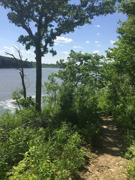 The Coralville Reservoir just beyond the Osprey Trail, looking north.