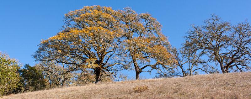 Tree at Shiloh Regional Park .