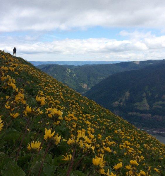 Springtime hikes on Dog Mountain are always a treat.
