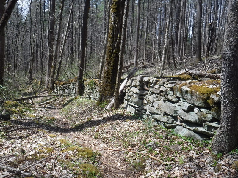 The oldest wall in Great Smoky Mountain National Park.