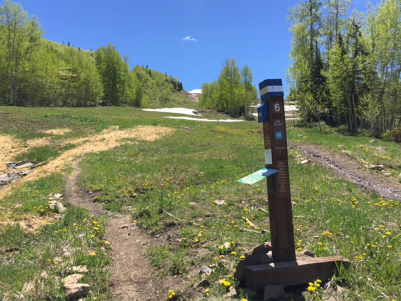 This is the trailhead from the base of the Gondola in Mountain Village.