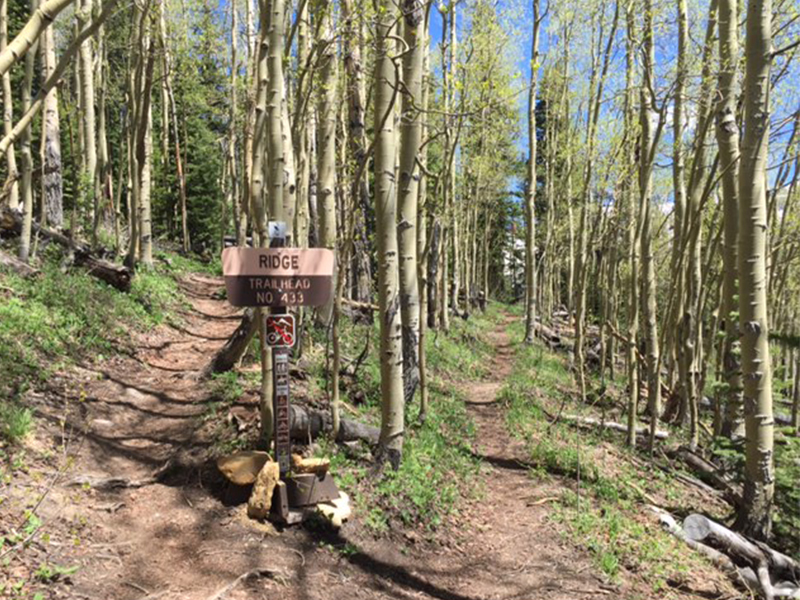 Entry into aspen forest, just beyond Allred's Restaurant and top of Gondola, go left here.