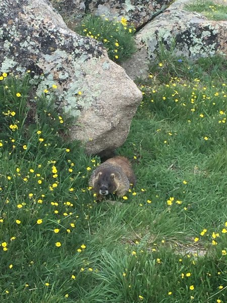 Love the marmots - really cool animals.