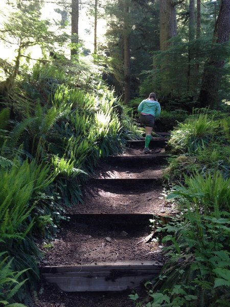 Going up the steep trail