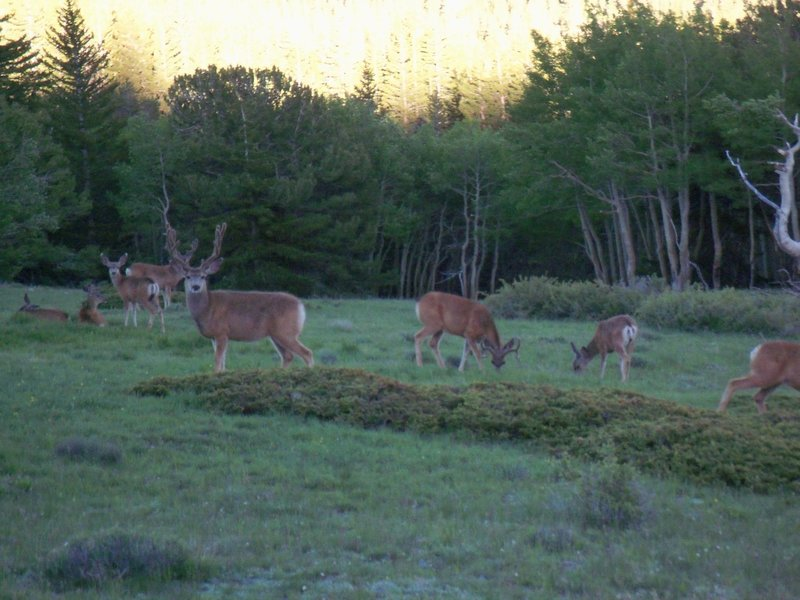Keep an eye out for local wildlife, but don't get too close; that buck means business.