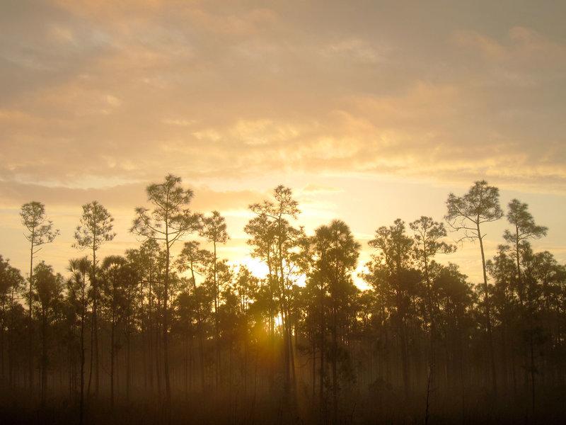 Long Pine Key Nature Trail, Everglades National Park.