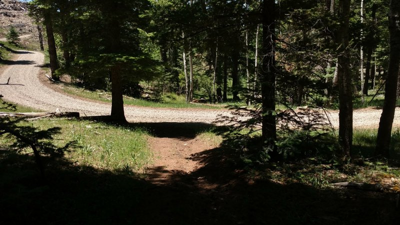 The trail continues on the other side of this road that leads to the gravel pit.