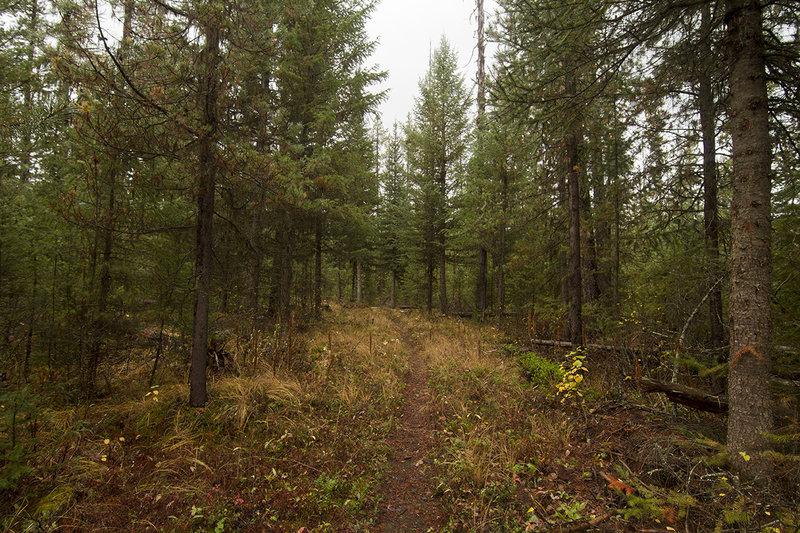 Traveling along the Kishenehn Creek Trail.