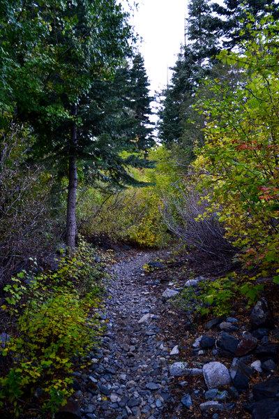 Tight, wooded singletrack on Glen Alpine.