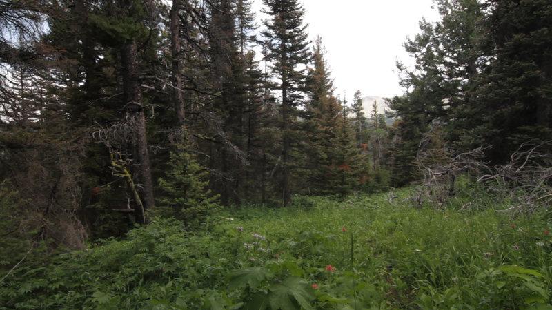 Along the Mild River Ridge Boundary Trail.