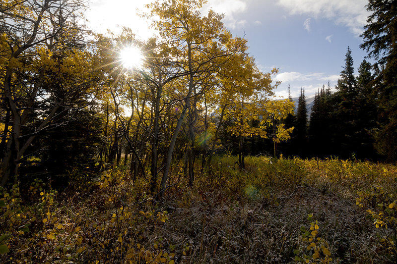 Aspens in small meadow at the end of the trail on Boulder Ridge.