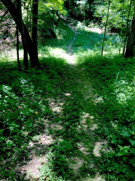 North Snowmobile Trail.