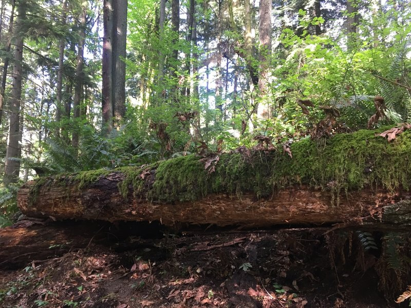 In death comes new life, as displayed by this nurse log.