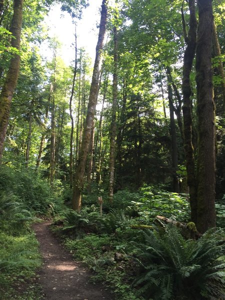 Dense forest is the name of the game on Margaret's Way.