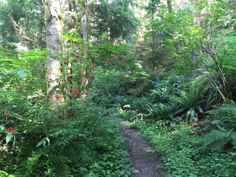 Jungle-like forest at the intersection of Chybinski and West Access.
