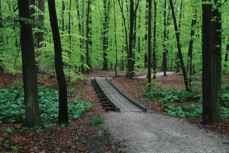 Gravel doubletrack and wooden bridge along route.