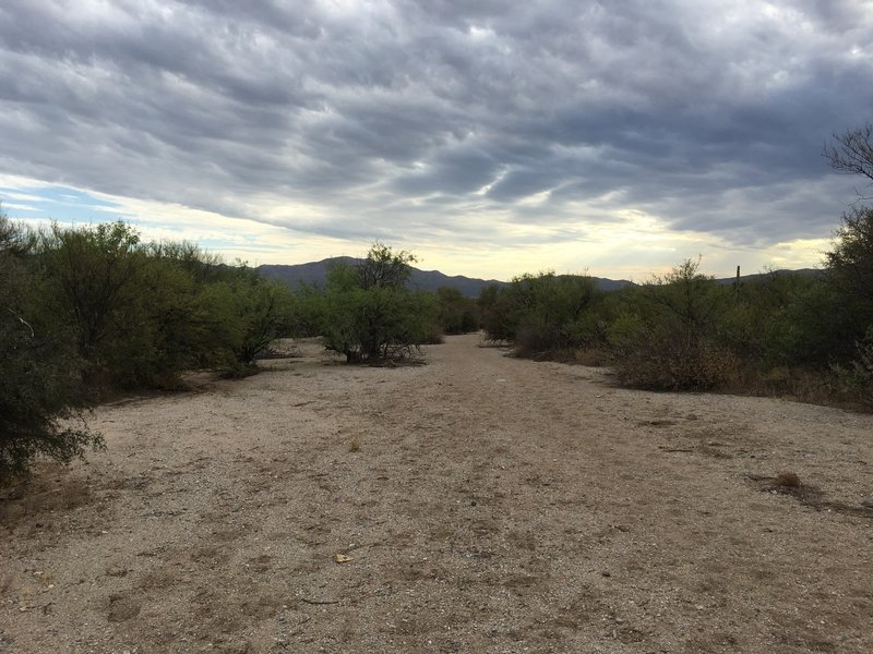 View looking north from Javelina Wash Trail.