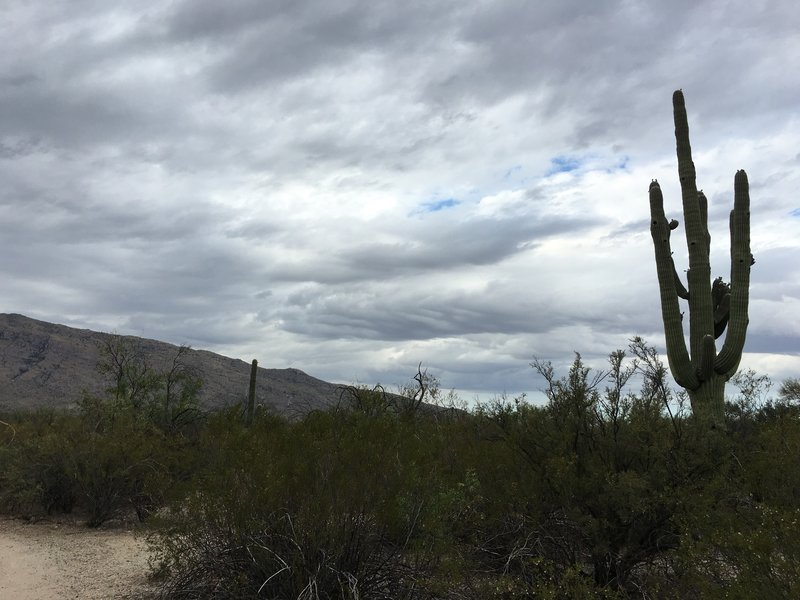 Early morning clouds above Tanque Verde Ridge as seen from Mica View Trail.