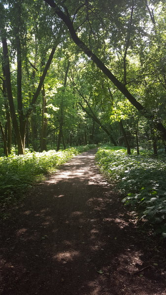 Picture of the shaded area of the trail, where it gets away from the river for a bit.