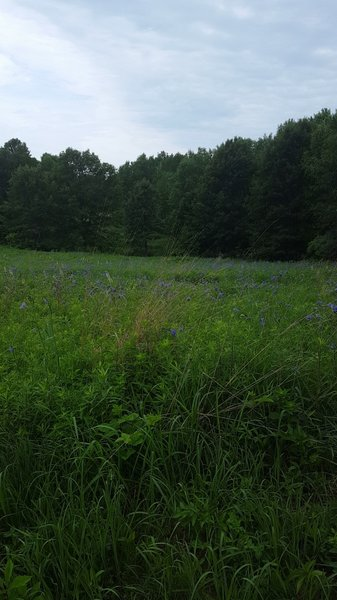 A meadow off of a horse trail.