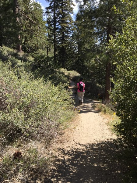 Traveling down the Burkhart Trail between Buckhorn Campground and Cooper Canyon.