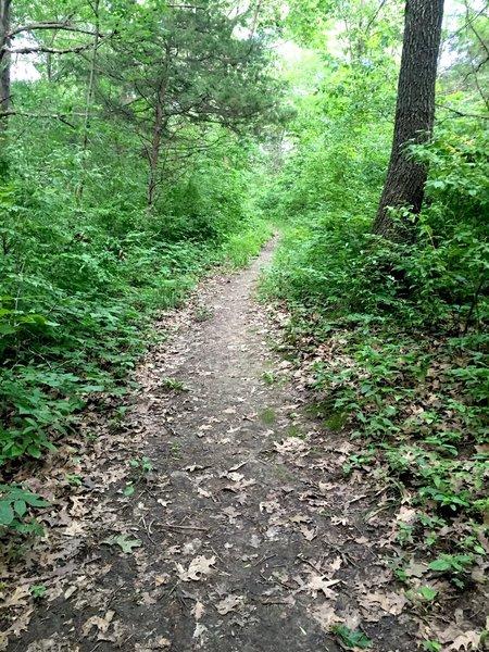 Triangle Trail.