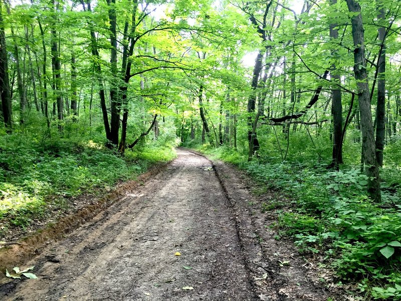 Service road section of the Bird Blind Loop.